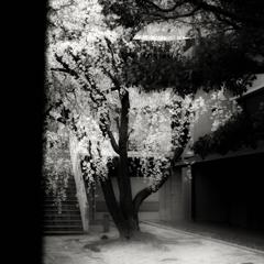 Gallery Six / stabilo - cerisier